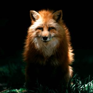 Wild-animal-pic-15.png